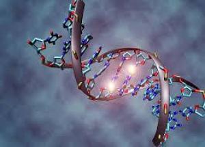 Секрет счастливого брака зашифрован в ДНК