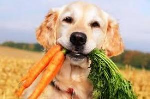 Ученые не советуют кормить собак сырым мясом. Может пострадать здоровье людей